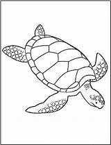 Coloring Pages Turtle Turtles Printable sketch template