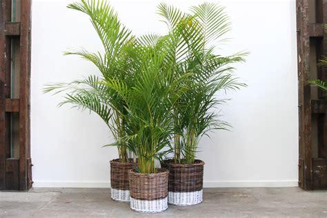 planter storage laundry baskets naturally cane rattan