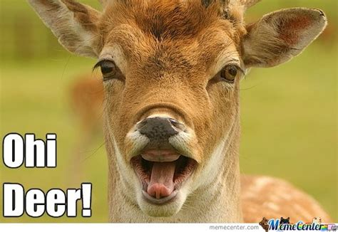 Deer Memes - deer memes best collection of funny deer pictures
