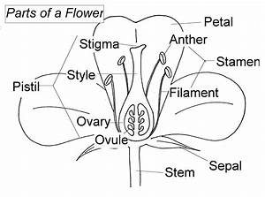 10 Best Images Of Flower Diagram Worksheet