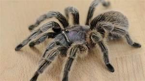 Faire Fuir Les Araignées : des araign es g antes et agressives terrorisent un village indien ~ Melissatoandfro.com Idées de Décoration