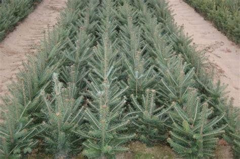 seedlings transplants boschs countryview nursery