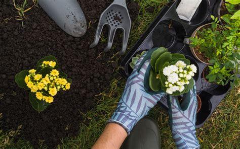 menanam tanaman hias pemula urban icon magazine