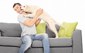 Pes si stale olizuje labky