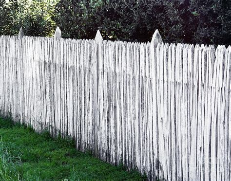 white wooden picket fence photograph by david buffington