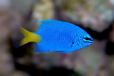 fish   find   great barrier reef distant