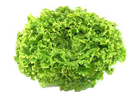 cuisine salade salade batavia la vie grande épicerie et