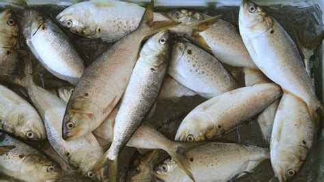 cuomo expected  sign bunker fish protection bill newsday
