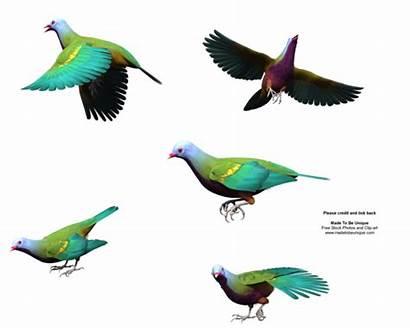 Sayap Burung Serangga Obyek Transparan Dan Sephia