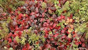 Plants The Tundra Biome