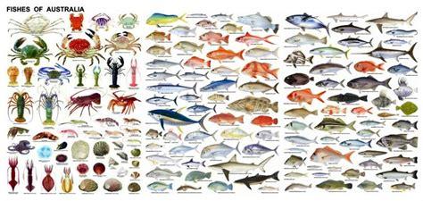 australian fish species fish chart fish types  fish