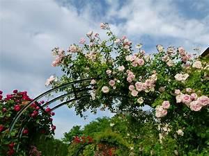 Rosen Für Rosenbogen : rosenbogen metall die sch nsten modelle im berblick ~ Orissabook.com Haus und Dekorationen