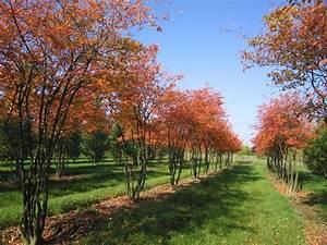 Die Schönsten Gartenbäume : 222 besten garten bilder auf pinterest kuchenglasur ~ Michelbontemps.com Haus und Dekorationen
