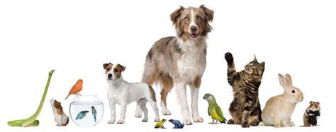 pat les animaux de compagnie le march 233 des animaux de compagnie se porte bien