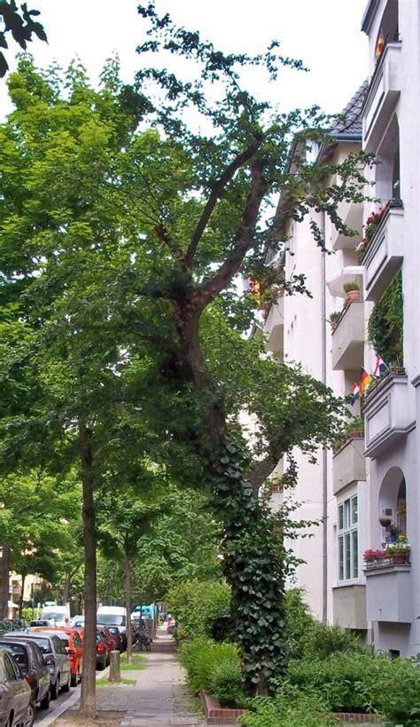 Botanischer Garten Berlin November by Bgfas Botanischer Garten Berlin Lichtenberg Frankfurter