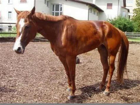 Selen Mangel Pferd