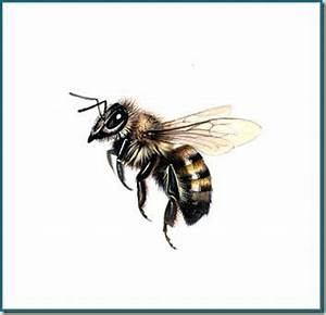 25+ Best Ideas about Bee Drawing on Pinterest | Honey bee ...
