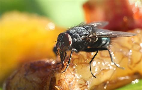 Pest Control Procedures In The Food Industry  A Recipe