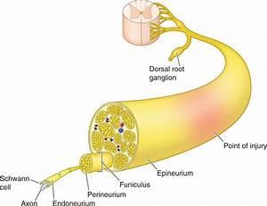 Percutaneous Peripheral Nerve And Field Stimulation