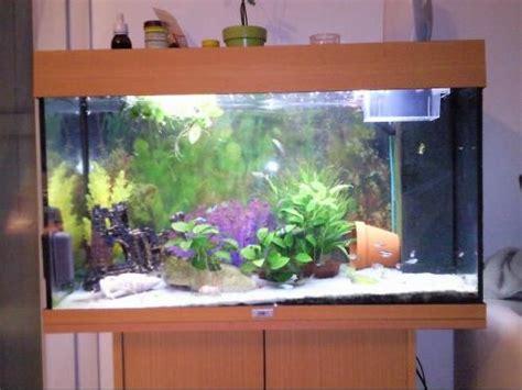 id 233 es pour d 233 corer mon bac aquariums et vivariums forum animaux