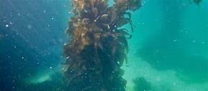 Stewart Island Snorkeling Expedition