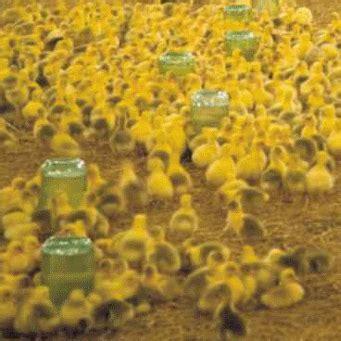 поилка для своими руками для курицы