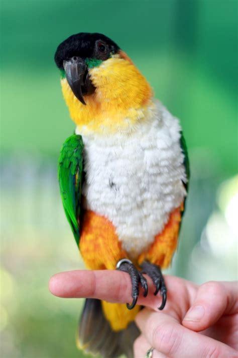papageien  unikale fotos zum inspirieren