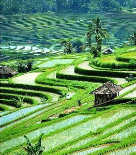 exotic places ubud bali bali vacations