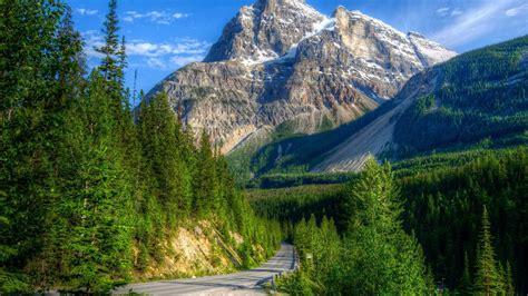 beautiful mountain landscape green pine forest high