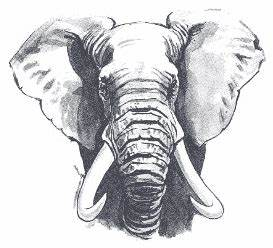 Head and Body of the African Elephant