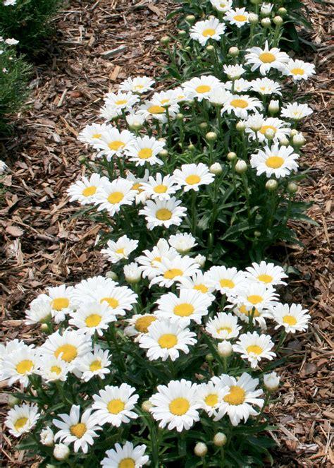 summer flowering plants all about women s things summer flowers top ten list for your summer flower garden