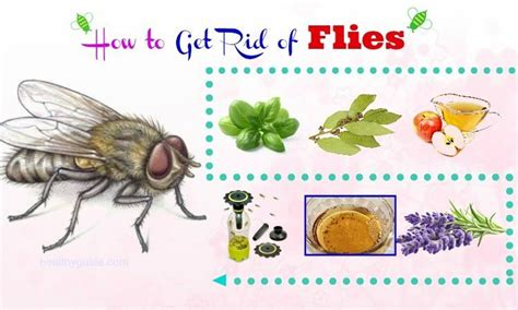 33 Tips How To Get Rid Of Flies In Home, Bathroom, Kitchen