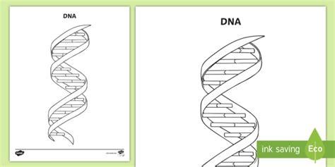 dna coloring worksheet chemistry atoms molecules matter 3rd grade 4th
