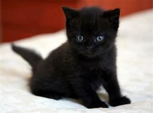 Black Cat Green Eyes Breed - Cats Types