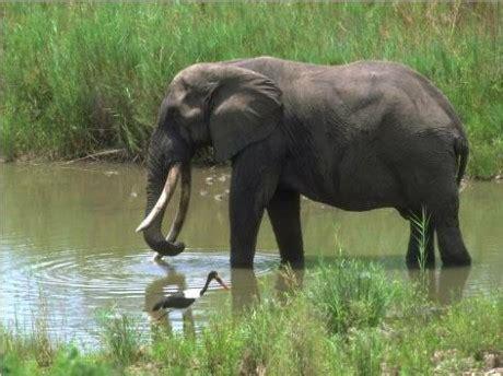 zviratka fotoalbum sloni slon africky