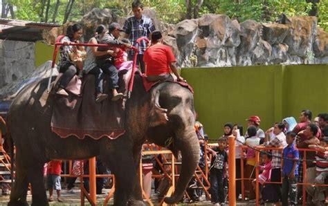 nama kebun binatang  indonesia tempat wisata keluarga