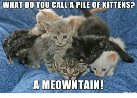 call  pile  kittens  meowntain