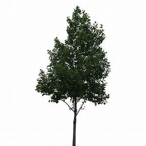 Perfectly Cutout Tree - Immediate Entourage | Trees ...