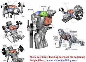 The 5 Best Chest Building Exercises For Beginning Bodybuilders
