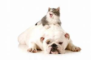 Photo Collection Cute Cats And Dogs Together Oct Cat Dog ...