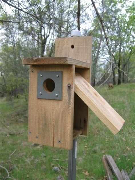 25 best ideas about bluebird house plans on pinterest