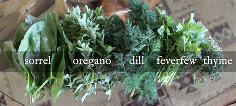 how to harvest herbs how to harvest and dry herbs the official website of jamie foley