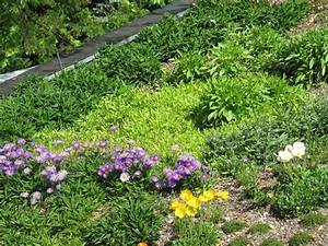 Extensive Dachbegrünung Pflanzen : mediterrane dachbegr nung gartenbau und landschaftsbau aus erftstadt wir planen und bauen ~ Frokenaadalensverden.com Haus und Dekorationen