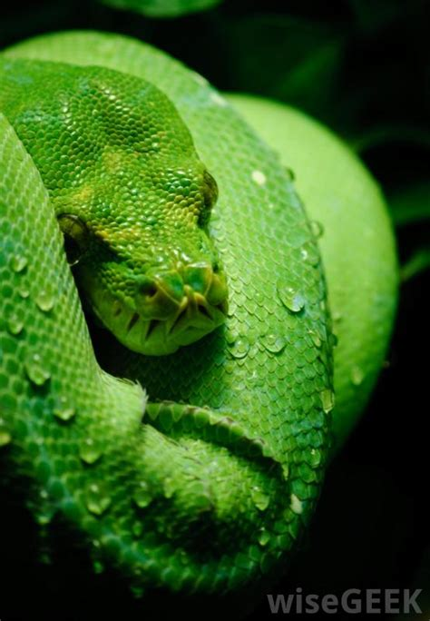 snakes types different snake python tree