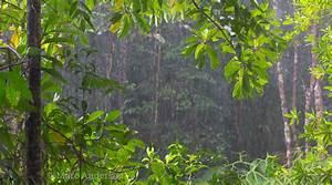 Monsoon In Borneo