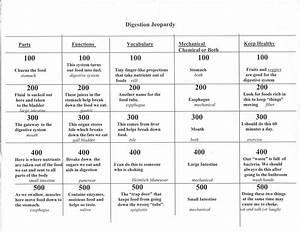 Health  P E     Study Guides