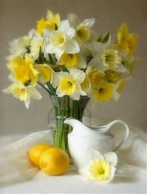 120 Best Images About Daffodils  Jonquils  Narcissus On Pinterest  Gardens, William