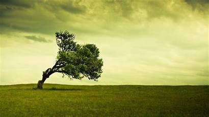 Alone Tree Nature Landscape Trees Field Natural