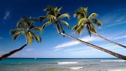 Barbados Beach Palm Desktop Trees Ocean Tropical