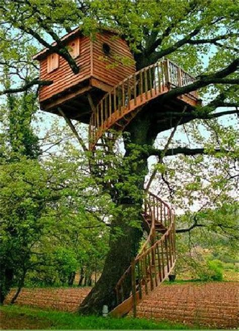 Mindblowing Planet Earth World's Best Tree House